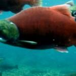 Fisheries & Aquatic Services